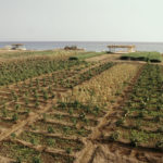 Suoli mediterranei: le migliori alternative per ridurre le perdite di CO2 e aumentare la fertilità