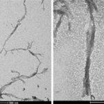 Prodotto in laboratorio un peptide bionico che si accende e trasforma la luce in corrente