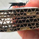 """Dagli insetti """"bioraffinerie"""" per produrre energia, nuovi materiali e compost"""