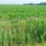 Irrigazione hi-tech per mitigare la salinizzazione del suolo: Smart Agrowetlands arriva anche in Spagna