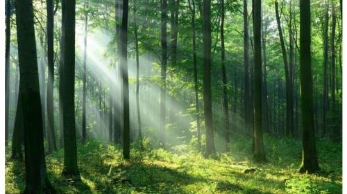Il percorso sostenibile di Trust inizia dal progetto Clevergreen