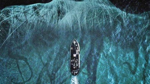 Sea Fever – Contagio in alto mare – Recensione del Blu-ray Koch Media